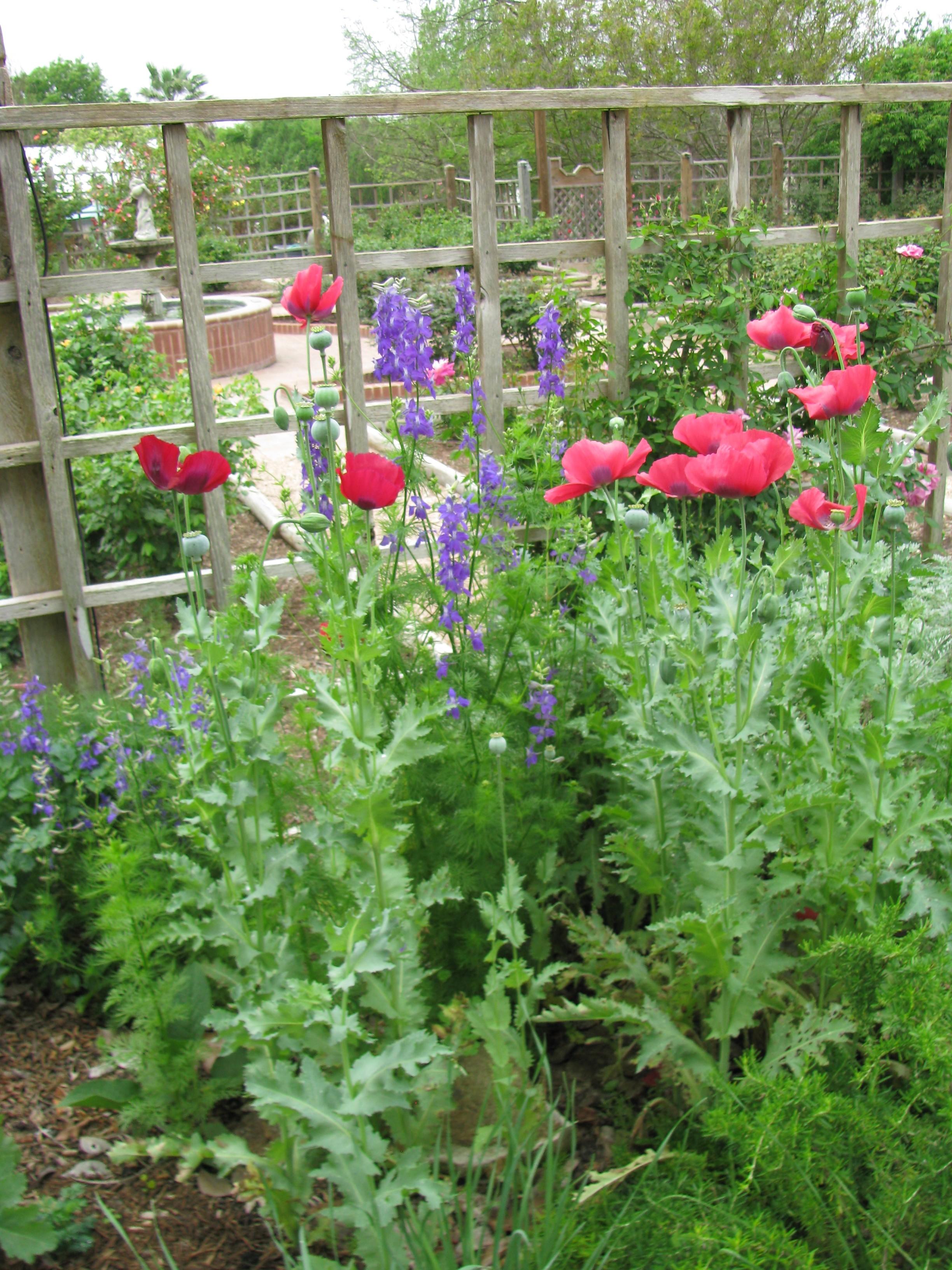 San antonio botanical garden gardendaze s blog