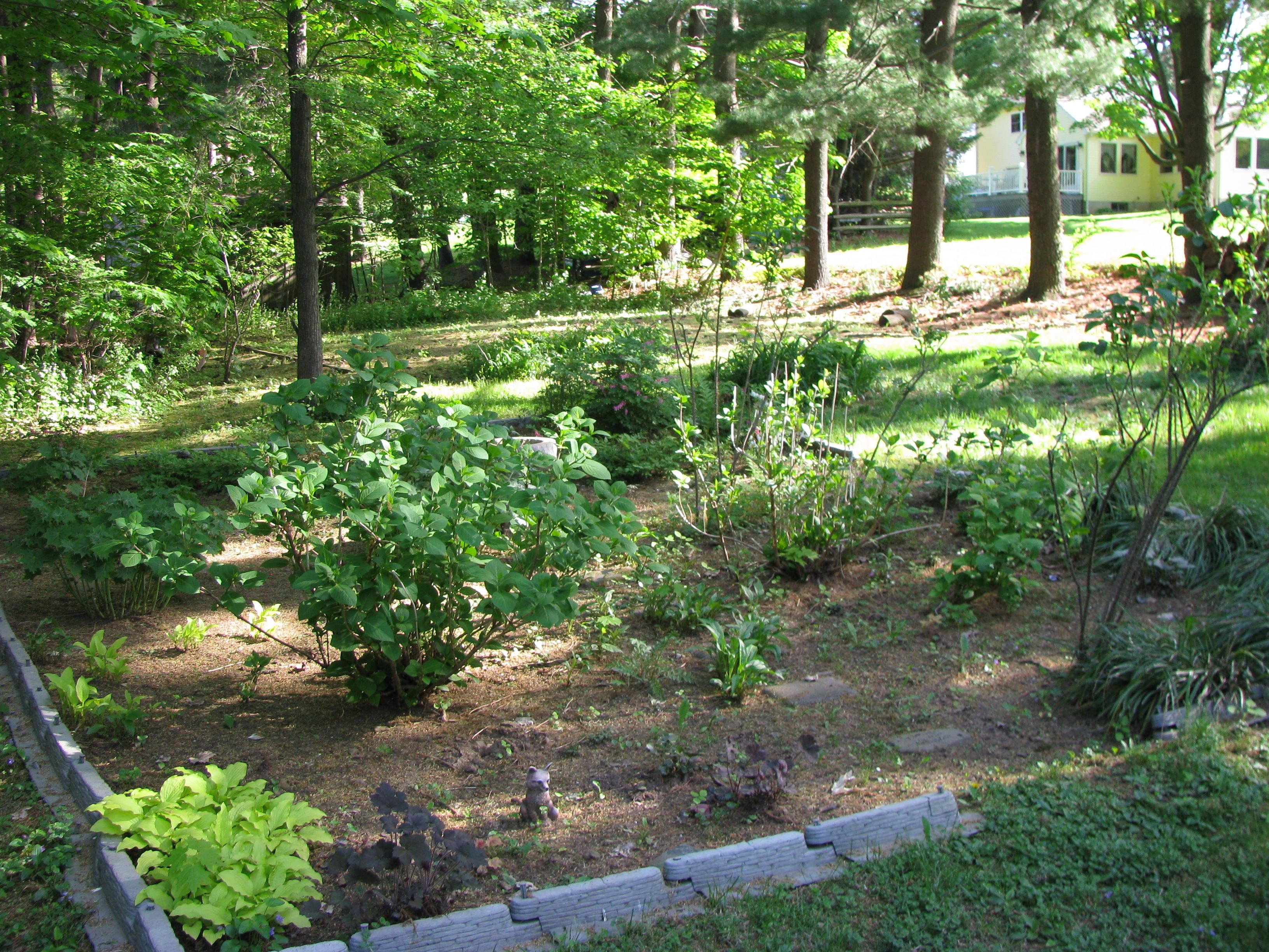 Shrub Garden Designs | 3264 x 2448 · 1736 kB · jpeg