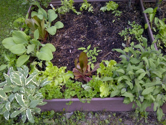 portion of vegetable garden