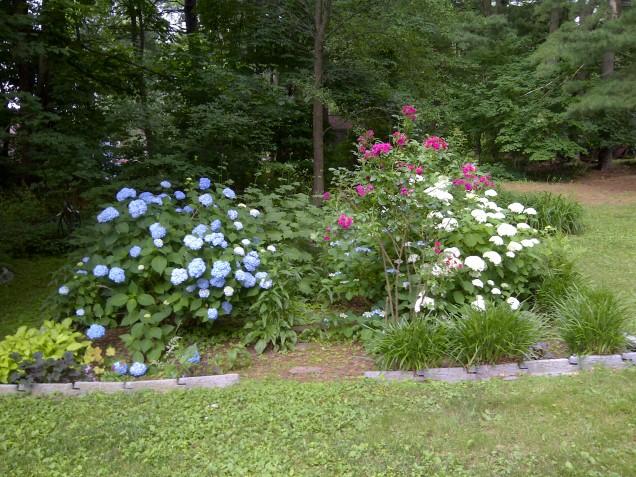 red, white & blue garden