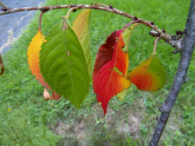 Early fall color
