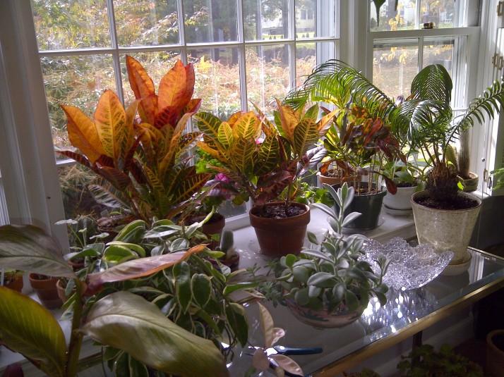 Autumnal Houseplants!