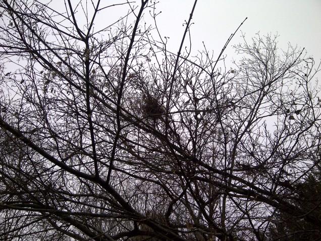 old bird's nest