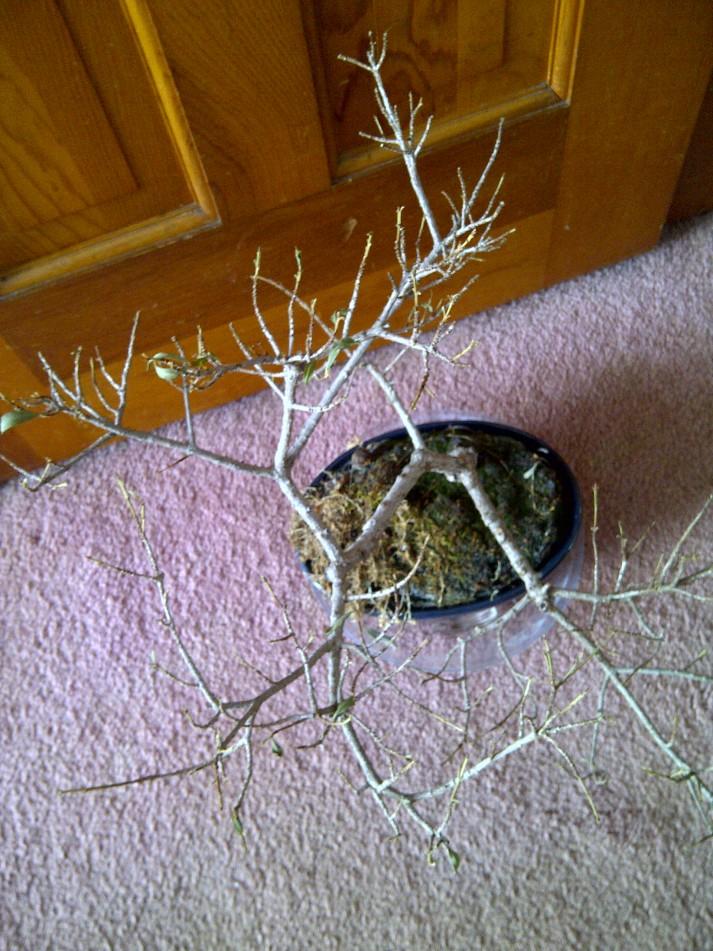 Not dead house plant
