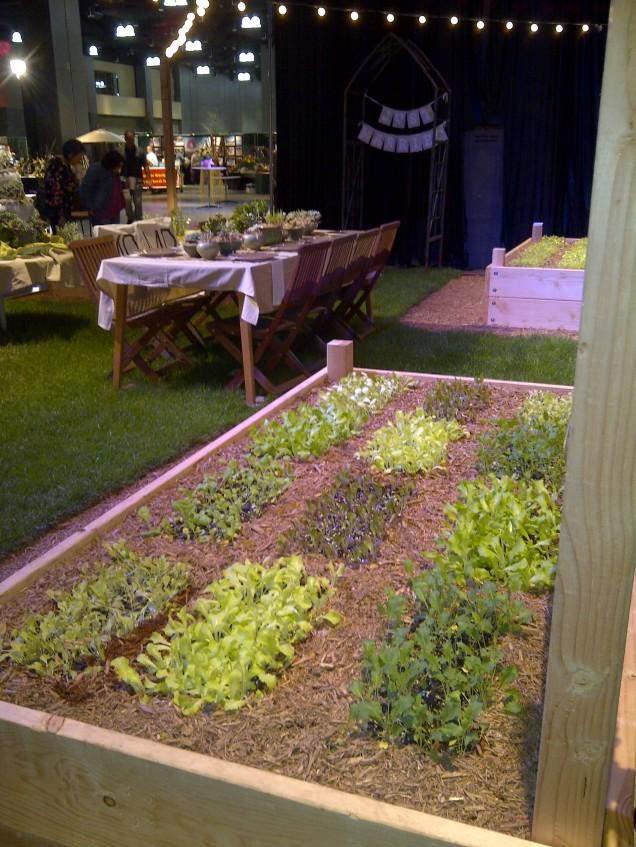 lettuce beds