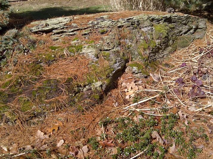 moss on bedrock