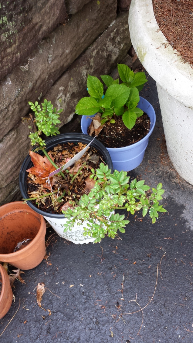 over wintered plants