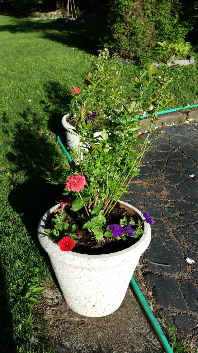 Pollinator Pots