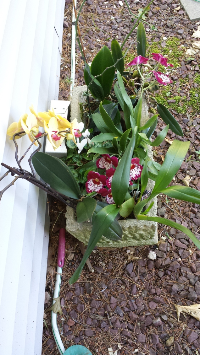 orchids outside