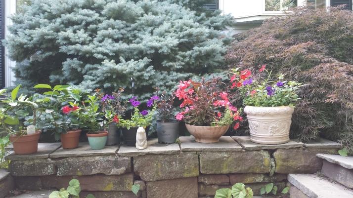 Annual pots