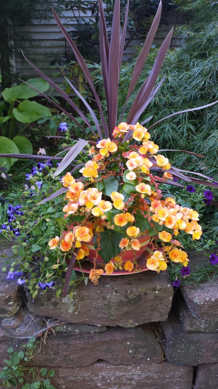 "The ""forgotten"" planter"