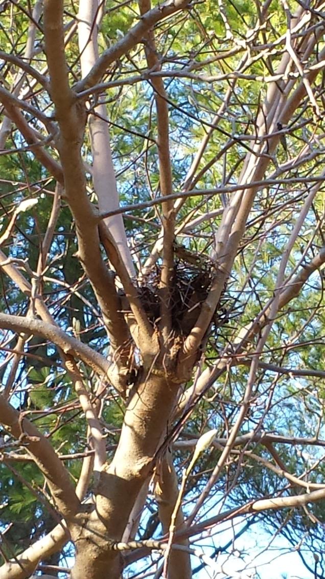 Magnolia nest
