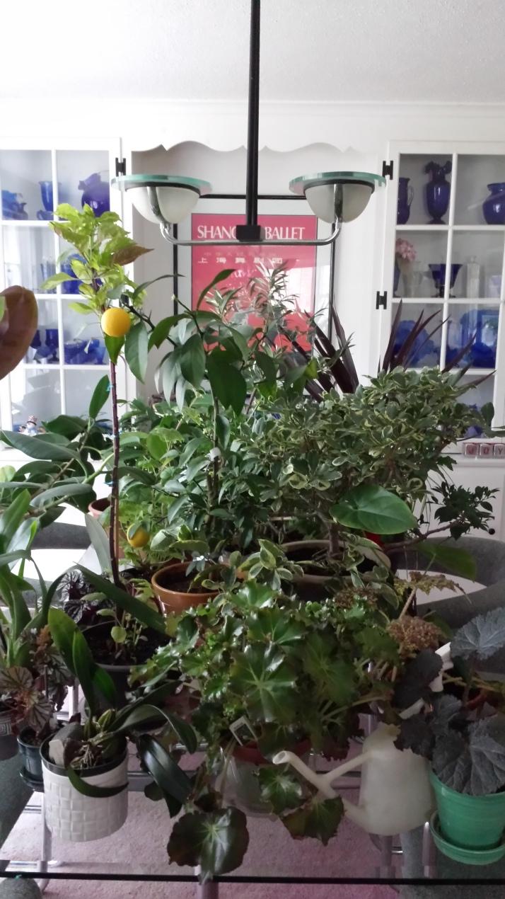 Plant triage