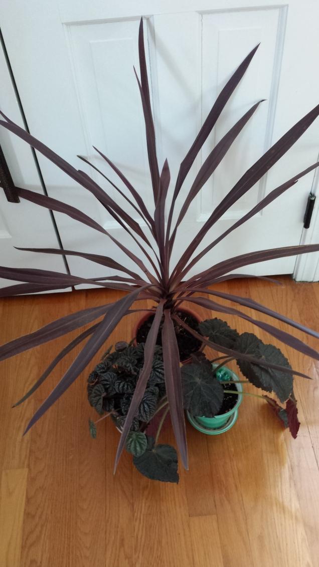 Marsala plants