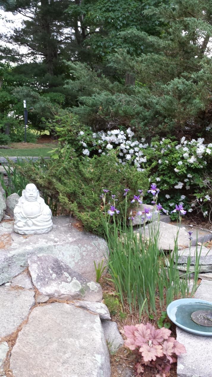 iris & azalea