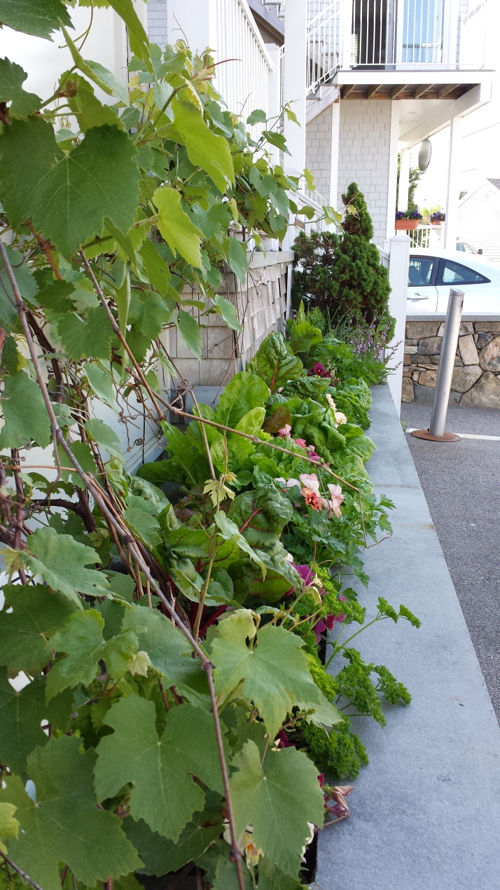 edibles with grape vine