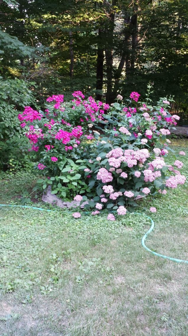 rose & hydrangea