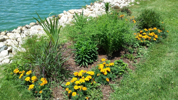 native garden with marigolds