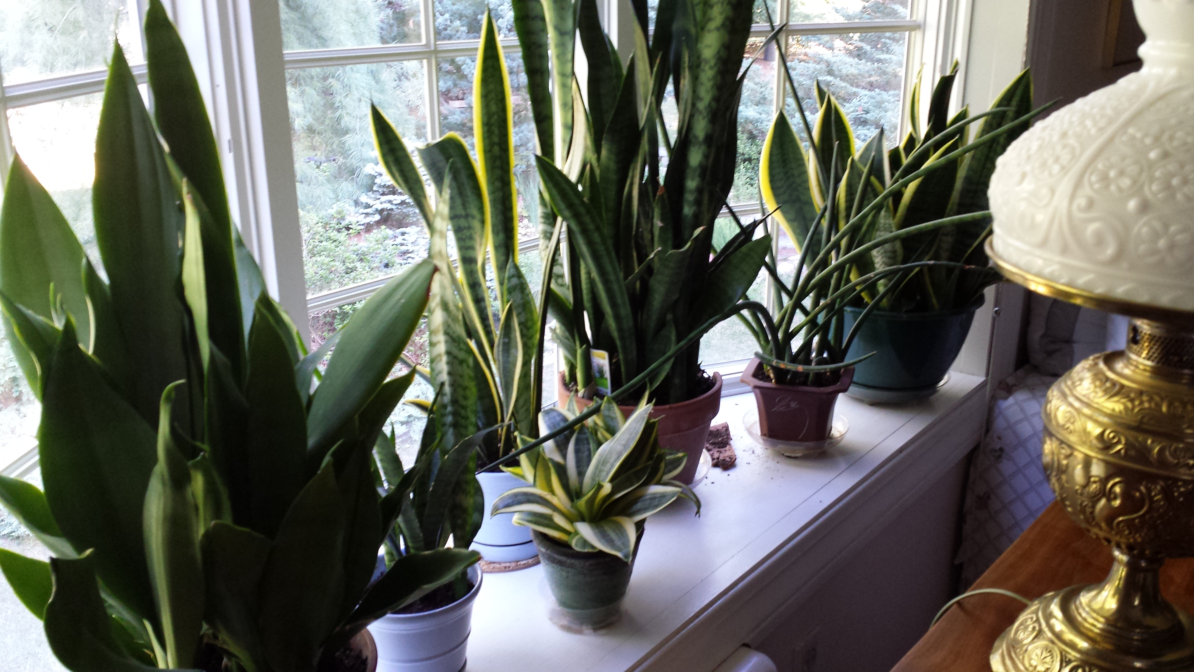 Easy Care Plants For A West Window Gardendaze