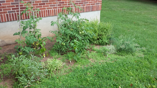 work vegetable garden