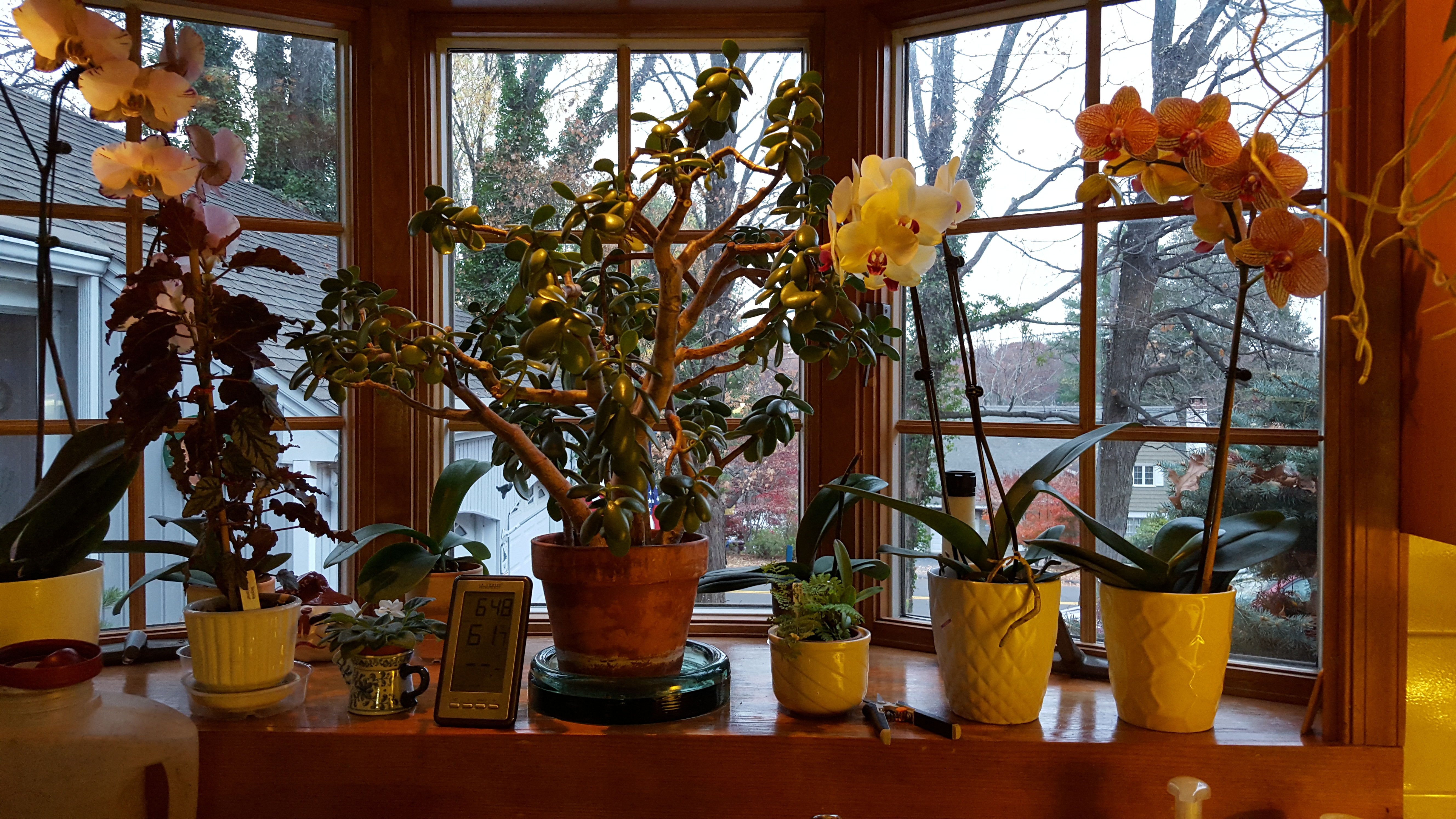 Easy Care Plants for an East Window – Gardendaze