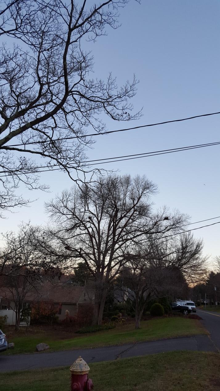 Squirrels' Nests at dusk