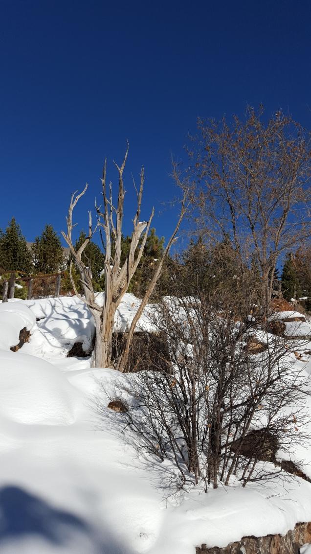 Colorado blue sky day