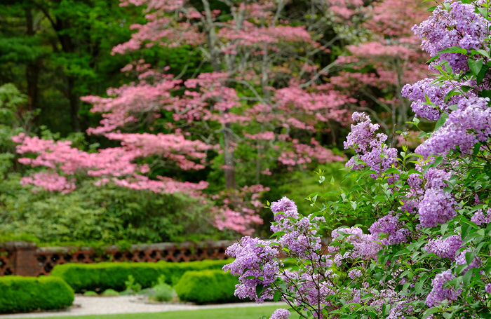 Bradley Estate Formal Garden close up